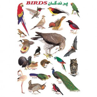 برچسب آموزشی پرندگان