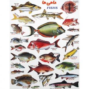 برچسب آموزشی ماهی ها