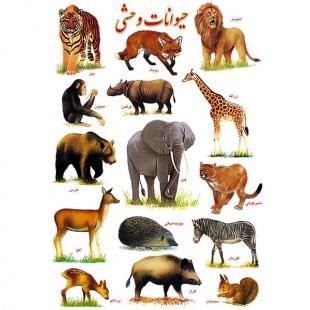 برچسب آموزشی حیوانات وحشی