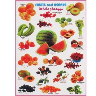 برچسب آموزشی میوه ها و دانه ها