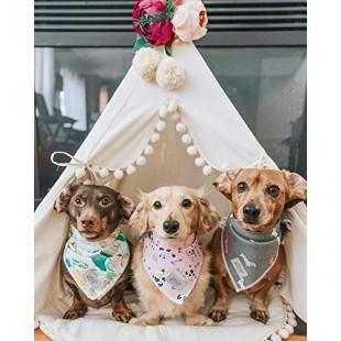 خرید چادر سرخپوستی سگ