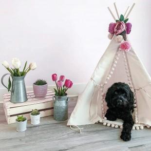 چادر سرخپوستی سگ