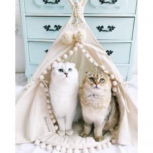 چادر حیوانات خانگی