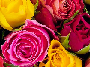 پنج فایده باور نکردنی رایحه گل رز